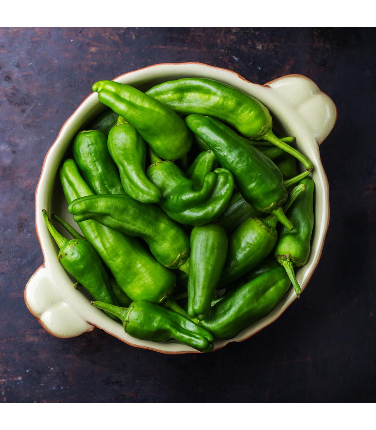 Chili Pimentos de Padron - Capsicum annuum- semena - 7 Ks