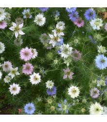 Černucha damašská - Nigella damascena - semena černuchy - 25 ks - směs barev
