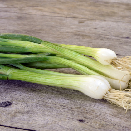 Cibule jarní bílá Bílý Lisabon - semena Cibule - 1 gr