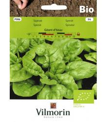 BIO Špenát Geant d'hiver - Spinacia oleracea - bio osivo špenátu - 10 g