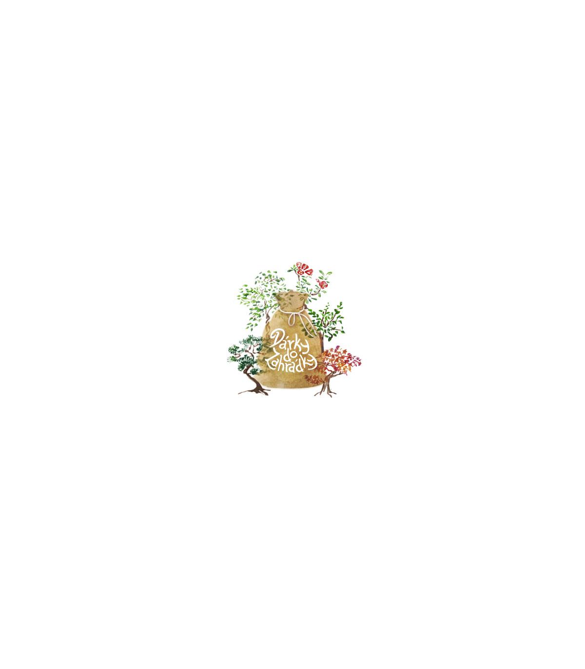 Balení semínek bonsají - ozdobné balení zdarma