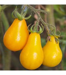 More about Rajče Žlutá hruška - Lycopersicon esculentum - semena rajčat - 6 ks