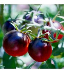 Rajče černé cherry - Lycopersicon esculentum - osivo rajčat - 6 ks