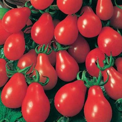 Rajče Červená hruška - Lycopersicon Esculentum - osivo rajčat - 7 ks