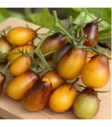 Rajče Indigo Pear Drops - Lycopersicon esculentum - semena rajčat - 5 ks