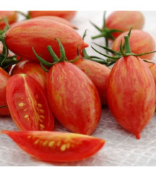 Rajče Artisan Pink Tiger - Lycopersicon esculentum - semena rajčat - 5 ks
