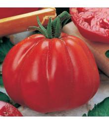 Rajče Coure di Bue - Lycopersicon lycopersicum - semena rajčat - 10 ks