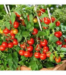 Rajče Donna  - tyčkové - prodej semen rajčat - Lycopersicon esculentum - 5 ks
