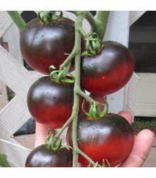 Rajče Indigo Apple - Lycopersicon lycopersicum L. - osivo rajčat - 7 ks