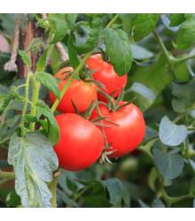 Rajče Karkulka - Lycopersicon Esculentum - semena rajčat - 20 ks