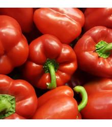 Paprika Babybell červená - Capsicum Annuum - osivo papriky - 10 ks