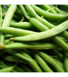 Fazol Neckarkönigin - Phaseolus vulgaris - semena fazolu - 30 ks