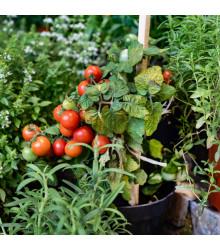 Cherry rajčátka Tumbler - Lycopersicon esculentum - prodej semen rajčat - 6 Ks
