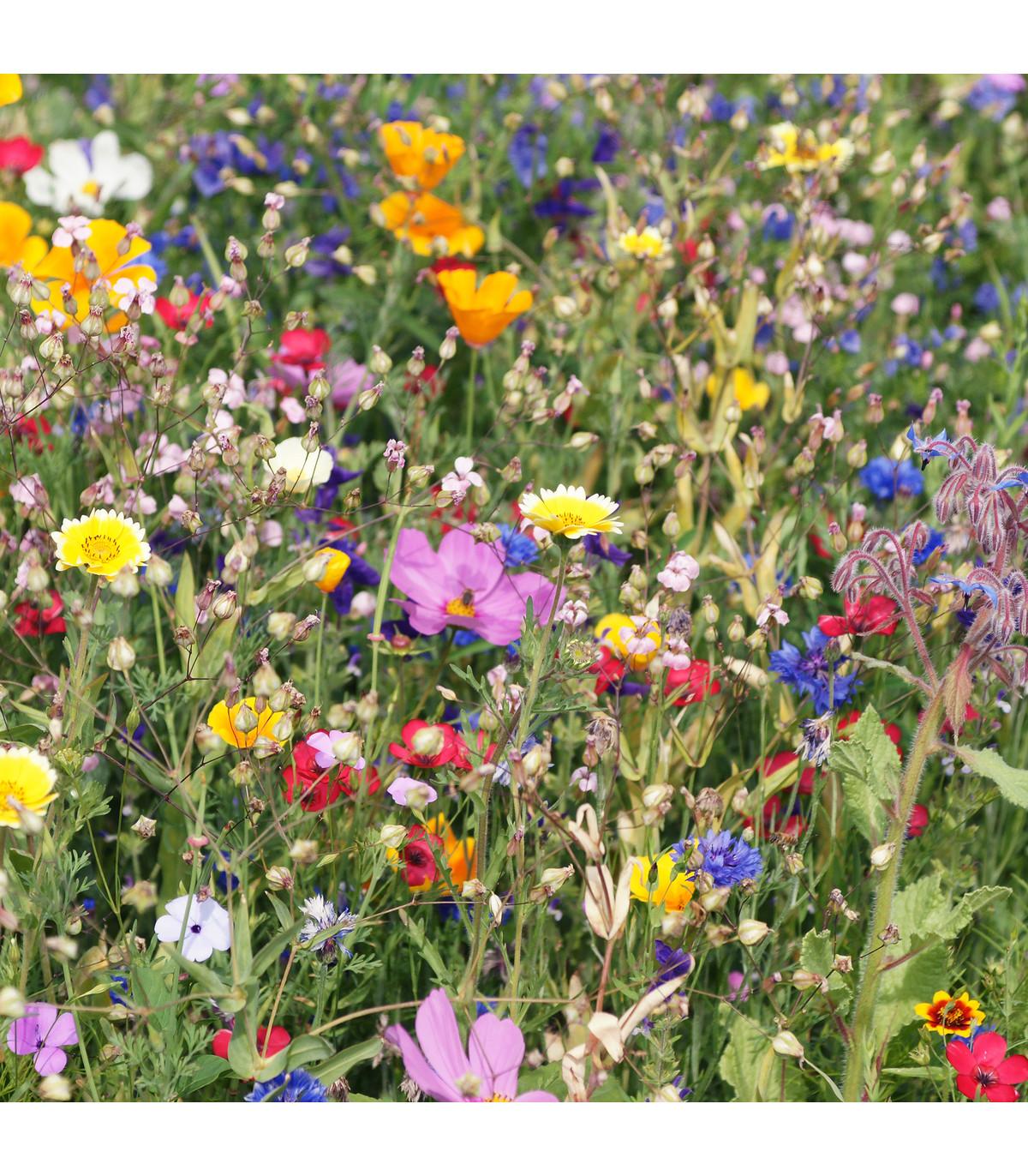 Louka starých časů - osivo Planta Naturalis - směs lučních květin - 50 g