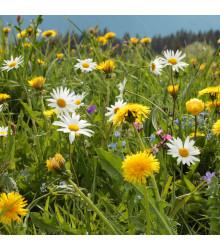 Horská louka - osivo Planta Naturalis - směs lučních květin - 10 g