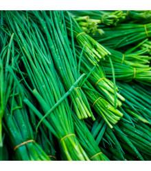 Pažitka Polyvert - Allium schoenoprasum L.- semena pažitky - 0,4 g