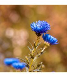 Letničky Zahradní sen v modrém - směs - osivo letniček - 0,9 g