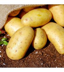 Sadbové brambory Carrera - Solanum tuberosum - žluté velmi rané - 5 kg