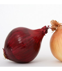 Cibule sazečka Romy - Allium Rosanna - cibulky sazečky - 500 g