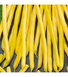 Fazol keříčkový Dior - Phaseolus vulgaris - osivo fazolu - 10 g