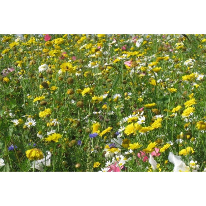 Letničky nízké - Kovbojská louka - semena letniček - 0,9 gr