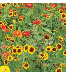 Letničky směs - zahradní sen od žluté do červené - 0,9 gr