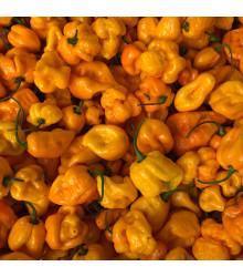 Chilli 7 Pot Brain Strain žluté - Capsicum chinense - osivo chilli - 6 ks
