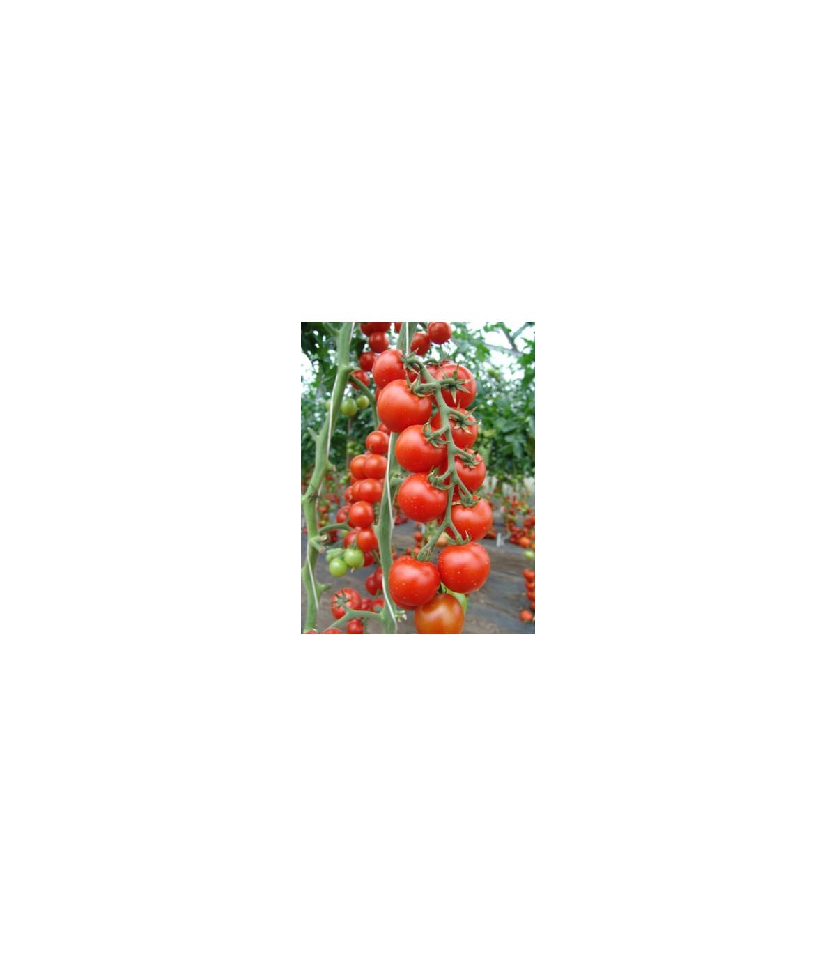 Rajče Spencer - Lycopersicon lycopersicum - osivo rajčat - 20 ks