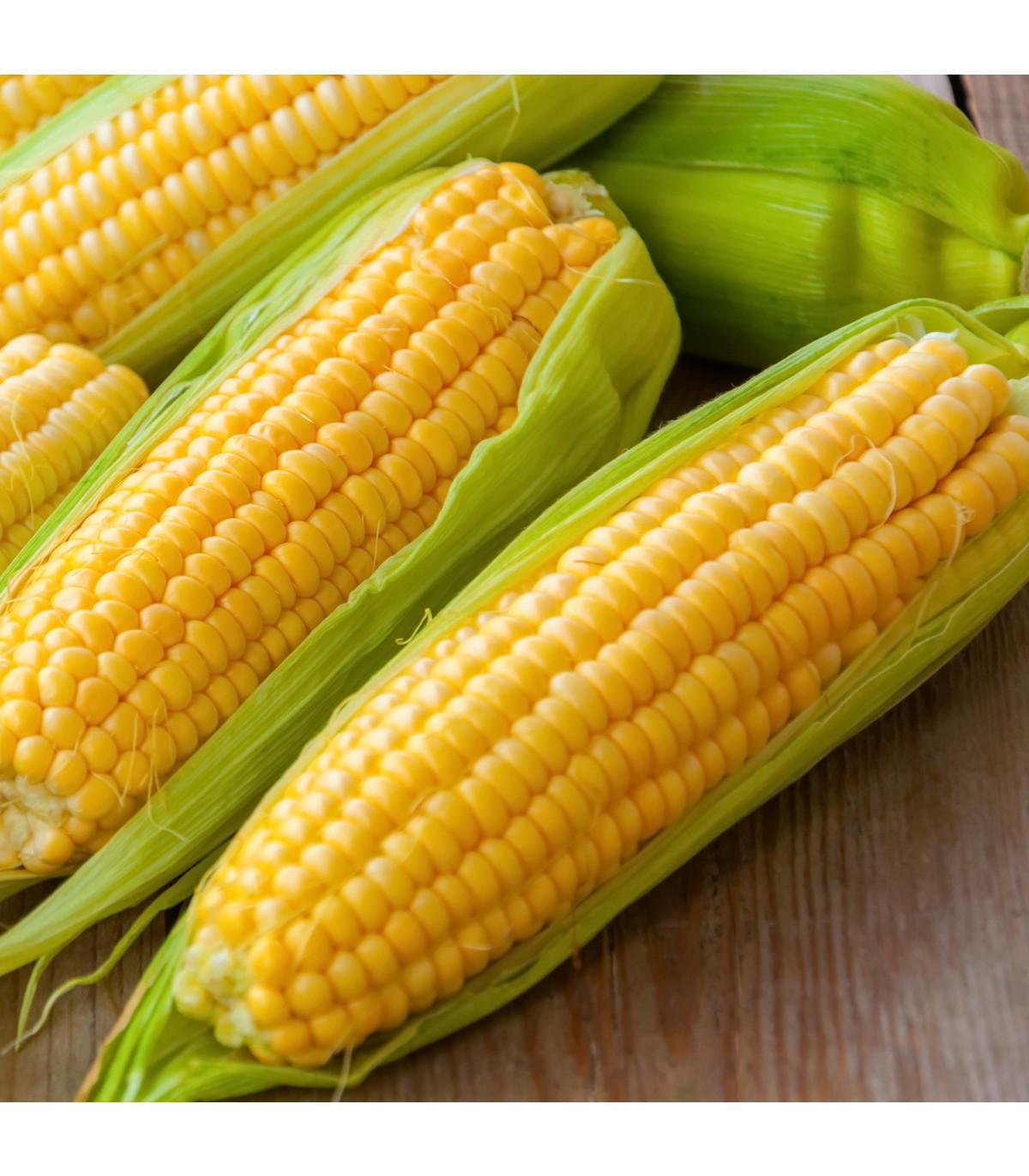Kukuřice Andrea F1 - Zea mays - osivo kukuřice - 16 ks