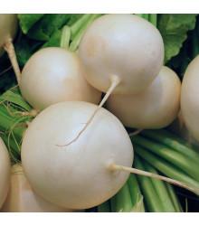 Ředkvička Albena - Raphanus sativus - osivo ředkvičky - 300 ks