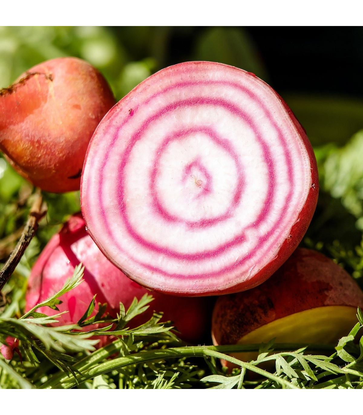 Řepa italská - Beta vulgaris - prodej původních odrůd zeleniny - 8 ks