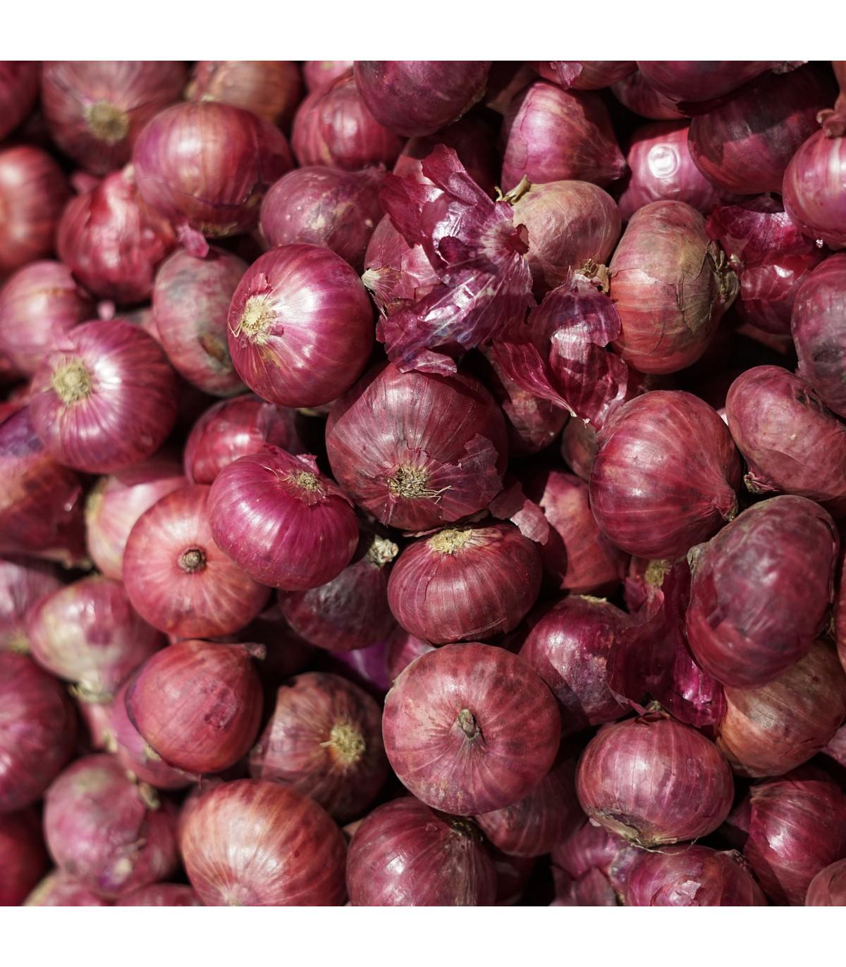 Cibule jarní kuchyňská Brunswijker - semena Cibule - 0,5 g