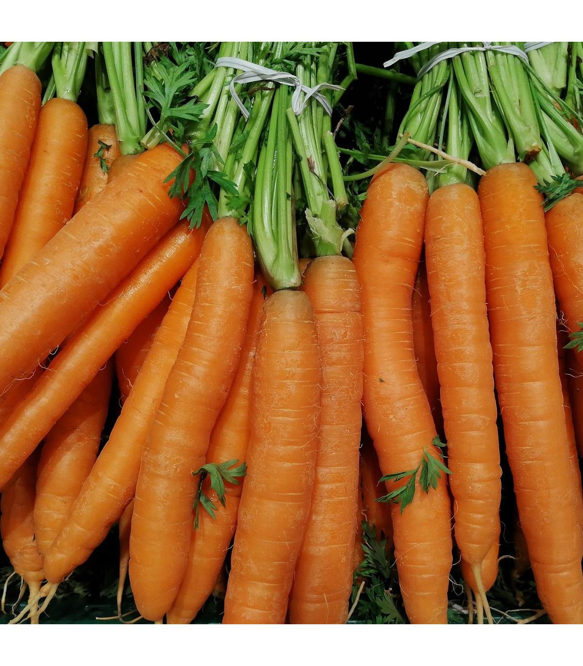Mrkev letní Juwarot - Daucus carota - osivo mrkve - 900 ks