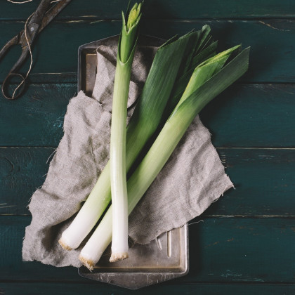 BIO Pór Hannibal - Allium porum - bio semena póru - 0,1 g