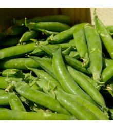 BIO hrách cukrový Ambrosia - Pisum sativum - bio osivo hrachu - 65 ks