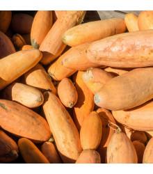 BIO tykev Pink Jumbo Banana - Cucurbita maxima - bio osivo tykve - 5 ks