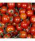 BIO rajče polní zakrslé Saint Pierre - Lycopersicon esculentum - bio osivo rajčat - 7 ks