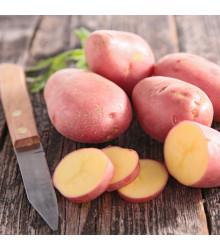 BIO Sadbové brambory Laura - Solanum tuberosum - Kiepenkerl - 10 ks