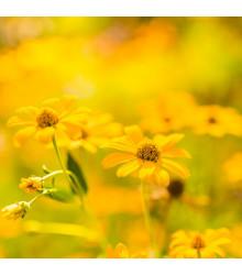 Letničky Zahradní sen ve žluté - směs - osivo letniček - 0,9 g