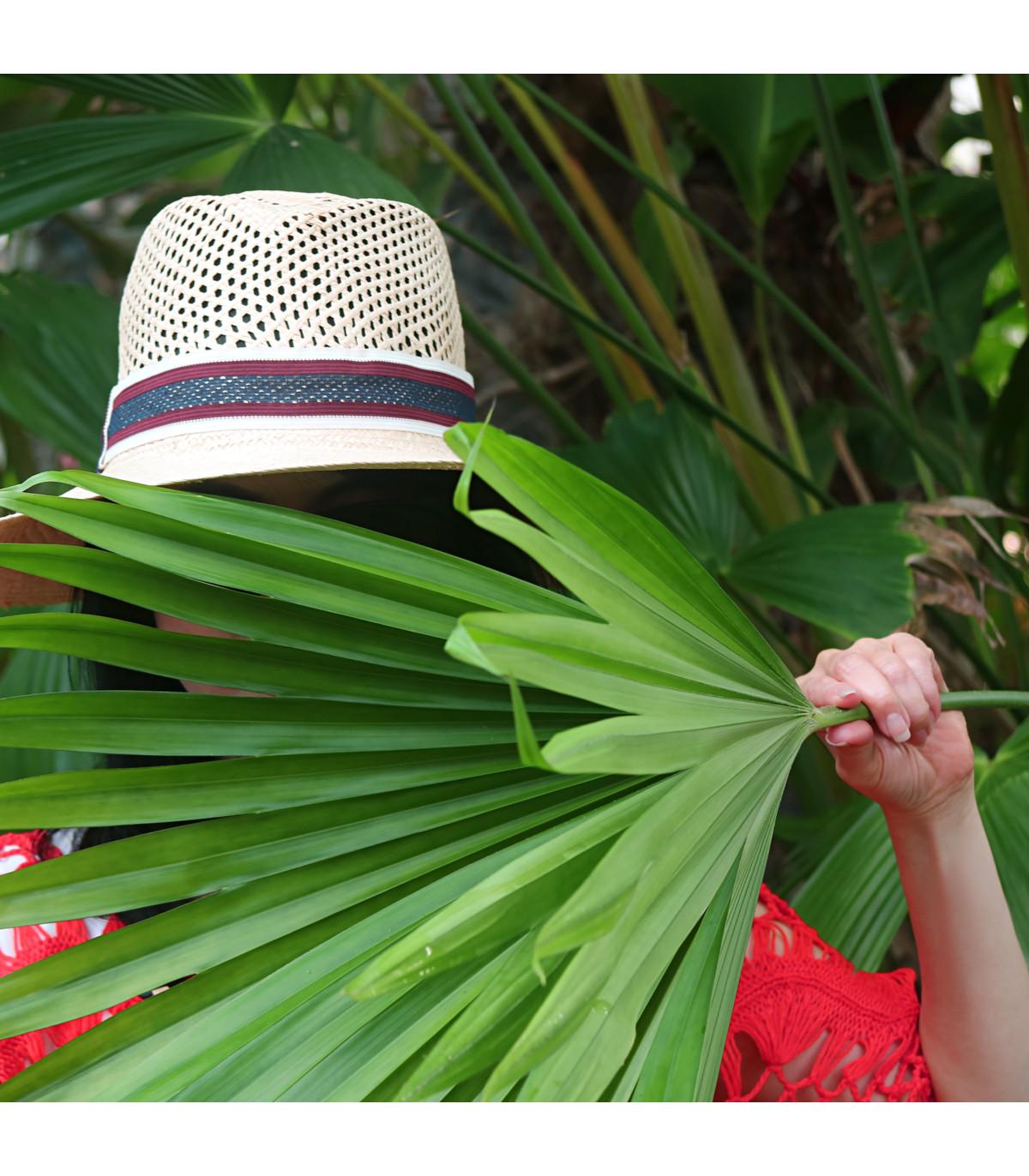 Palma - Carludovica rotundifolia