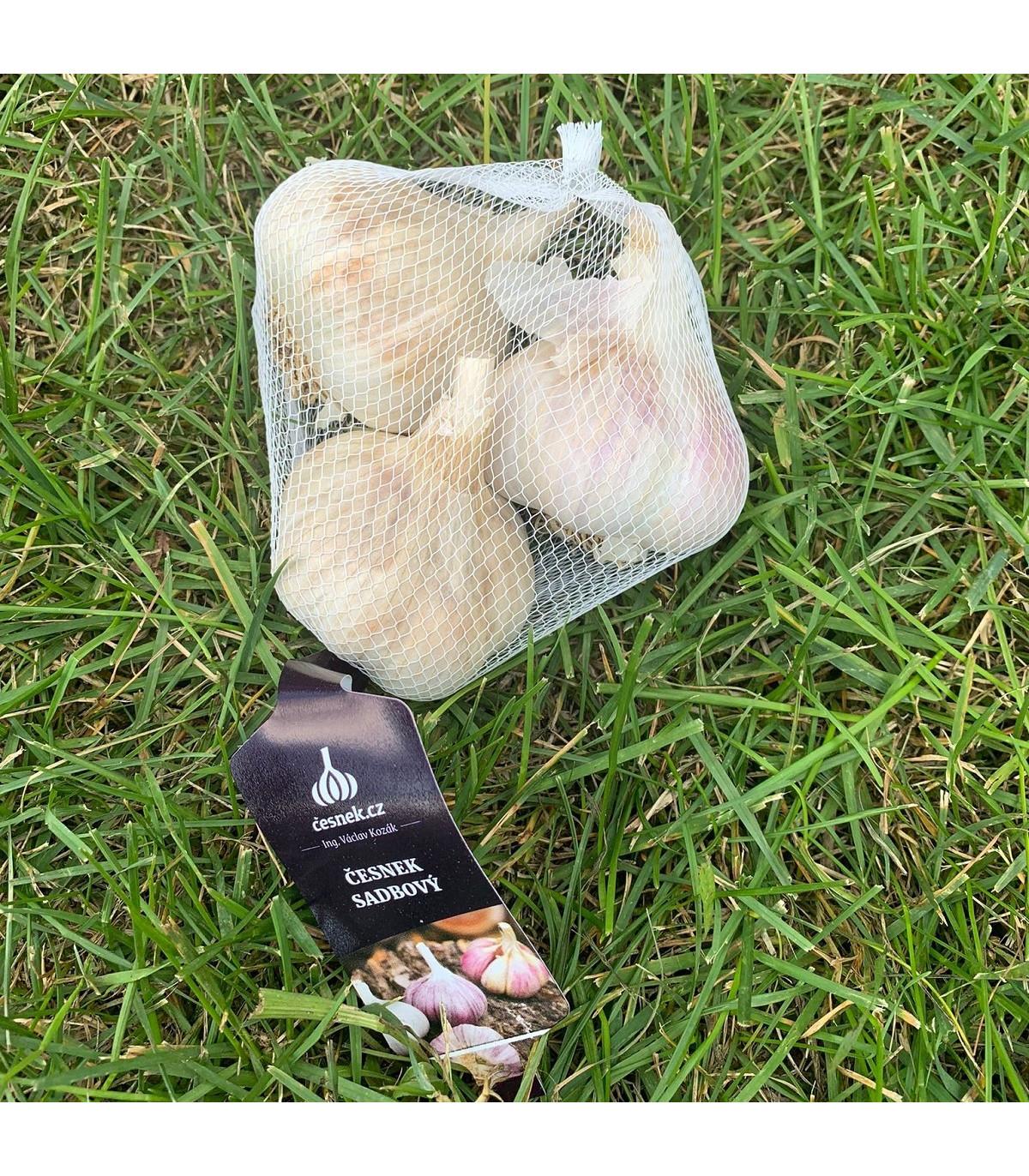 Sadbový česnek Havel - Allium sativum - paličák - cibule česneku - 3ks