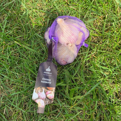 Sadbový česnek Anton - Allium sativum - nepaličák - cibule česneku - 4ks