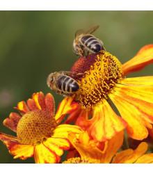 Jednoleté květy pro včely - osivo Planta Naturalis - směs letniček - 50 g