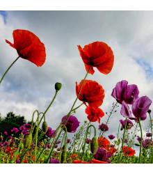 Polní kvítí - osivo Planta Naturalis - směs lučních květin a trav - 50 g