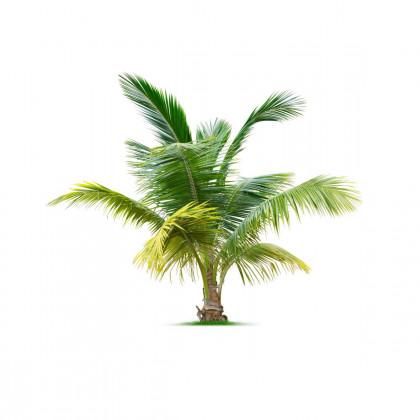 Palmy