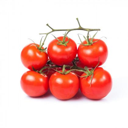 Keříčková rajčata