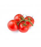 Tyčková rajčata