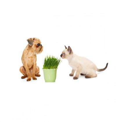 Rostliny pro zvířata