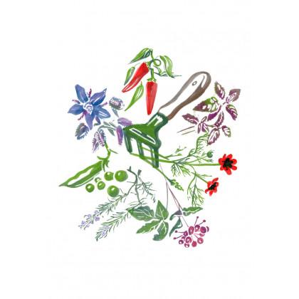 Amalaki - Angrešt indický - Phyllantus Emblica - prodej semen - 6 ks